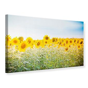 Canvas Print In the Sunflower Field