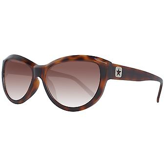 Converse sunglasses wavelength tortoise ladies Brown