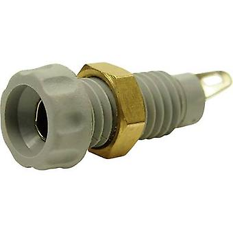 Jack socket Socket, vertical vertical Pin diameter: 4 mm Grey Cl