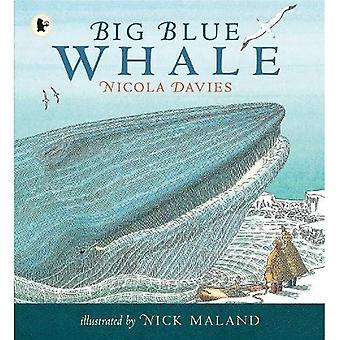 Grande baleine bleue (histoires de la Nature)