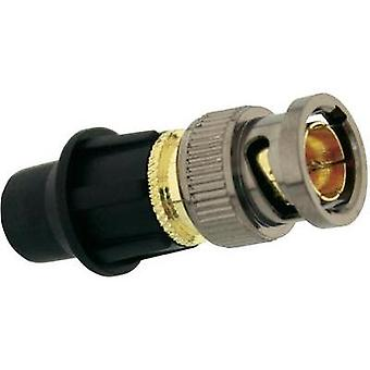 BNC connector Plug, straight 75 Ω Telecom Security 1 pc(s)