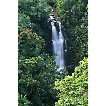 Hawaii Big Island Hamakua Coast Wasserfall umgeben von viel Grün A20H PosterPrint