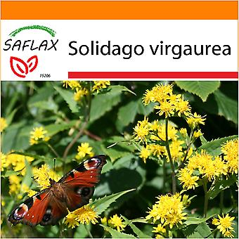 Saflax - Garden in the Bag - 100 seeds - Goldenrod - Solidage verge d'or - Verga d'oro  - Vara de oro - Echte Goldrute