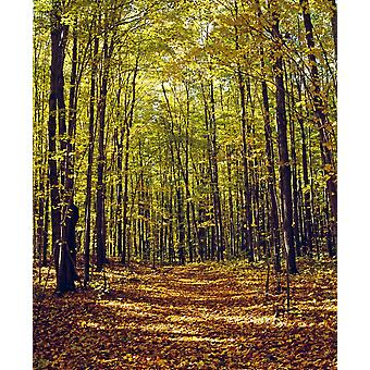 Forest In Quebec Canada PosterPrint