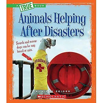 Tieren helfen nach Katastrophen (echte Bücher)