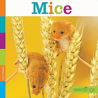Muizen (zaailingen: achtertuin dieren)