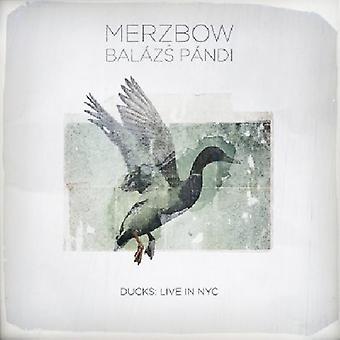 Merzbow & Balazs Pandi - ænder: Bor i Nyc [CD] USA import