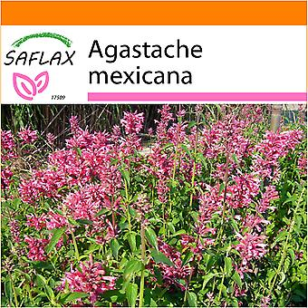 Saflax - Garden in the Bag - 50 seeds - Mexican Giant Hyssop - Agastache mexicaine - Anice menta messicana - Toronjil morado - Limonen - Aniskraut