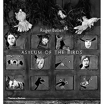 Asyl av fåglar