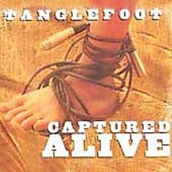 Tanglefoot - erobrede Alive [CD] USA import