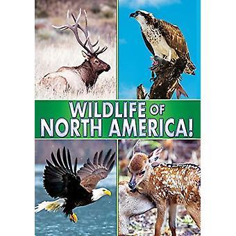 Dyrelivet i Nordamerika [DVD] USA import