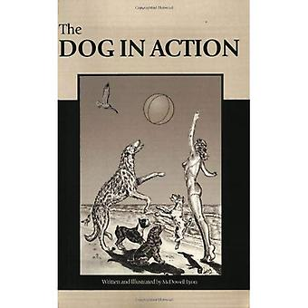 The Dog in Action: A Study of Anatomy and Locomotion as Applying to All Breeds