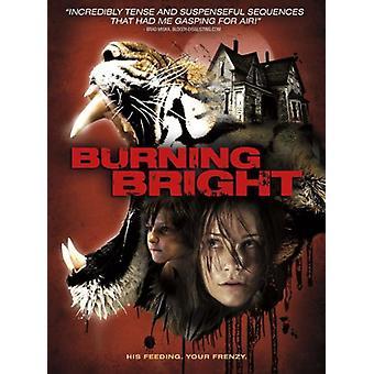Brennende lys [DVD] USA import