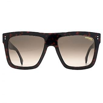 Carrera 1010 Sunglasses In Dark Havana