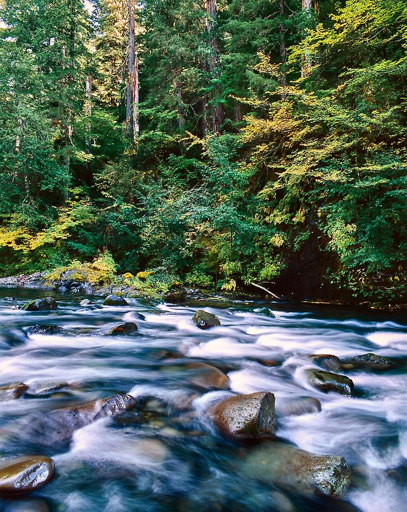 Scenic view of a river fFaibleing through rocks North Santiam River Willamette National Forest Lane County Oregon USA Poster Print by Panoramic Images (28 x 22)