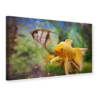 Canvas Print Colorful Fish