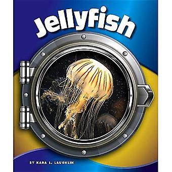 Jellyfish (In the Deep Blue Sea)