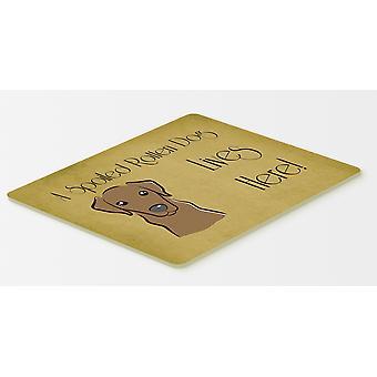 Labrador chocolat gâté chien vit ici cuisine ou bain Mat 20 x 30
