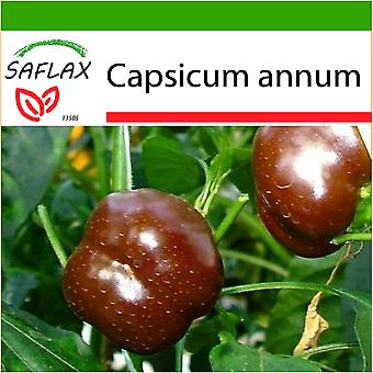 Saflax - 10 seeds - With soil - Pepper - Sweet Chocolate x - Paprika - Sweet Chocolate X - Peperoncino Sweet Chocolate - Pimiento sweet chocolate - Paprika - Sweet Chocolate x