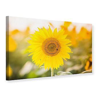 Leinwand drucken Leuchtende Sonnenblume