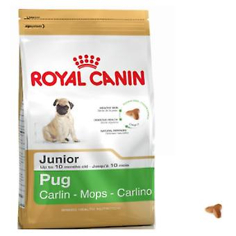 Royal Canin Mopshond Junior (Honden , Voeding , Droogvoer)