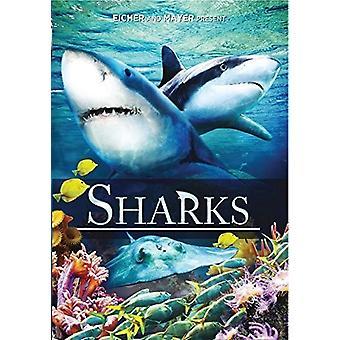 Hajer [DVD] USA importerer