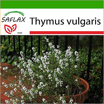 Saflax - 200 seeds - With soil - Common Thyme - Thym commun - Timo comune - Tomillo - Echter Thymian