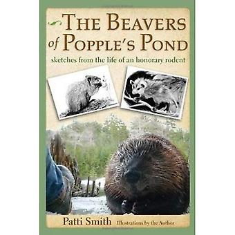 Beavers of Popple's Pond