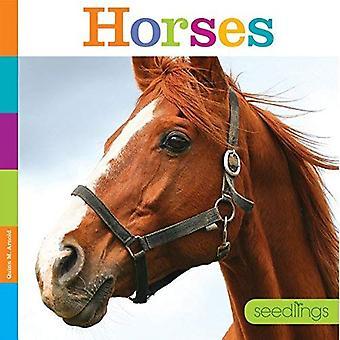 Horses (Seedlings)