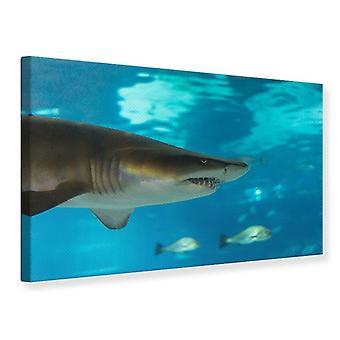 Der Hai-Leinwand