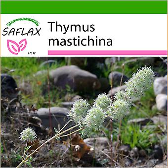 Saflax - 250 seeds - With soil - Mastic Thyme - Thym résineux - Timo mastichina - Tomillo blanco - Spanischer Majoran