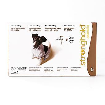 Hochburg für Hunde 5,1-10kg (11-22lbs) braun, 6-Pack