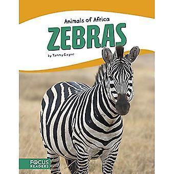 Animaux d'Afrique: zèbres