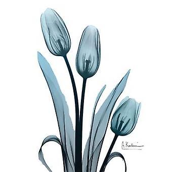 Midnight Sky Tulip Trio Poster Print by Albert Koetsier