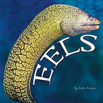 Eels (Ocean Animals)