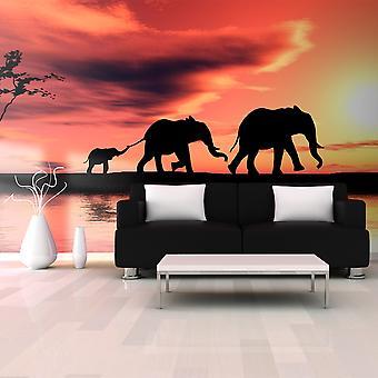 Carta da parati XXL - elefanti: famiglia