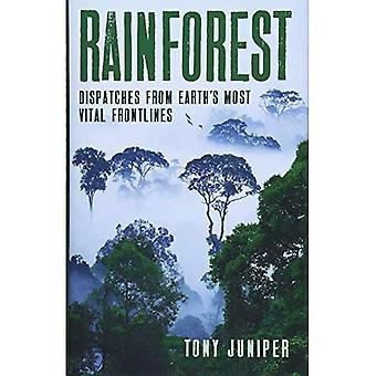 Regenwoud
