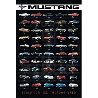 Ford - Mustang Evolution plakat plakat Print