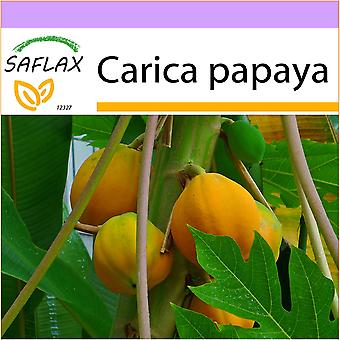 Saflax - 30 seeds - Melon Tree - Papayer - Papaia - Papaya - Tropischer Melonenbaum / Papaya