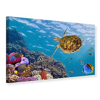 Canvas Print The Turtle