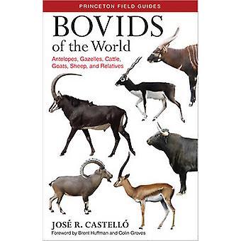 Bovids of the World - Antelopes - Gazelles - Cattle - Goats - Sheep -