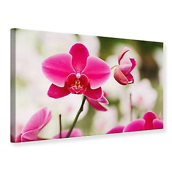 Canvas Print Perspective Orchids