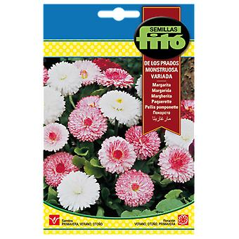 Semillas Fitó Daisy of the meadows monstrous varied (Garden , Gardening , Seeds)