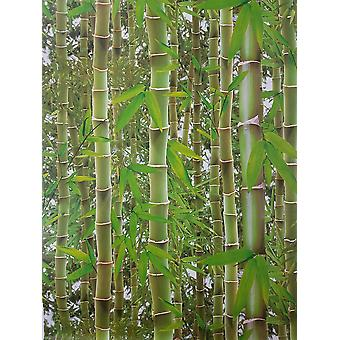 3D Effect Bamboo Forest Photo Mural Wallpaper Jungle Tropical Trees Green Debona