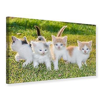 Canvas Print Kittens