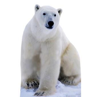Oso polar - recorte de cartón de tamaño natural / pie