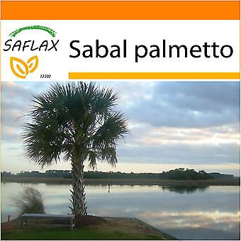 Saflax - Garden in the Bag - 8 seeds - Palmetto Palm - Chou palmiste - Palmetto  - Palmito - Palmettopalme