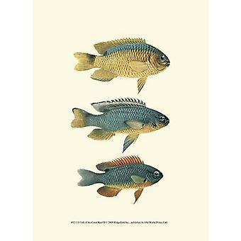 Fish of the Coral Reef II Poster Print (10 x 13)