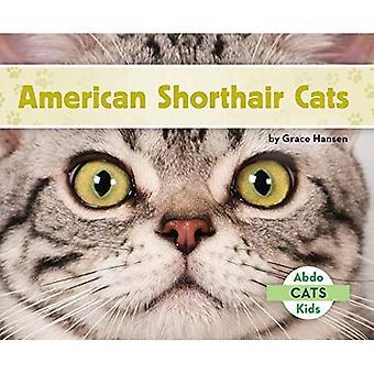 American Shorthair chats (Cats Set 2)