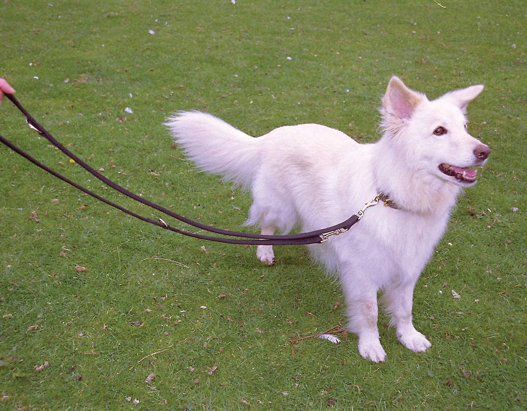 Company of Animals Halti Dog Training Lead Black Large Size, L Training Control